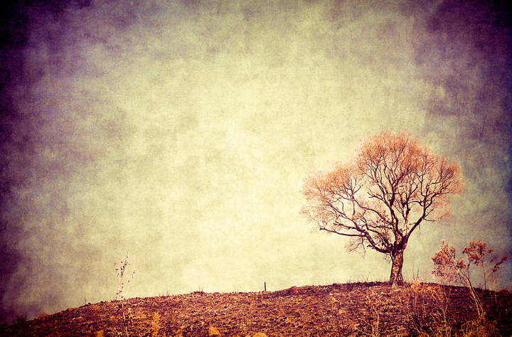 Lonely tree